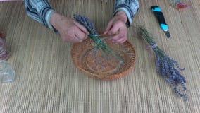 Senior woman herbalist hands binding lavender bunch stock video footage
