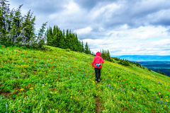 Senior Woman hiking on Tod Mountain in the Shuswap Highlands. Of central British Columbia, Canada stock photos