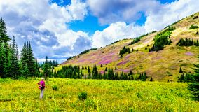 Senior woman on a hiking trail in alpine meadows at the foot of Tod Mountain. On a hike near Sun Peaks village in the Shuswap Highlands of central British Royalty Free Stock Images