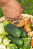 Senior woman holding a basket with vegetables Stock Photography