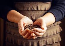 Senior woman holding coffee beans Stock Photos