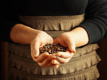 Senior woman holding coffee beans Stock Image
