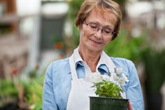 Senior woman holding potted plant Royalty Free Stock Image