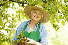 Senior Woman In Orchard Stock Image