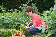 Senior woman in kitchen garden Stock Images