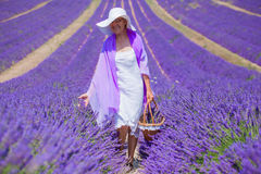 Senior woman in the lavander fields. Stock Photos