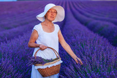 Senior woman in the lavander fields. Royalty Free Stock Images