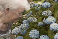 Senior woman looking at flowers outdoors royalty free stock images
