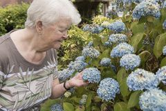 Senior woman looking at flowers outdoors royalty free stock photography