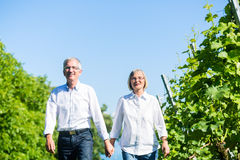 Senior woman and man having walk in summer Stock Photos