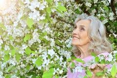 Senior woman near blooming tree. Beautiful senior woman standing near blooming tree royalty free stock image