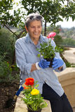 Senior Woman Outside Gardening Stock Photography