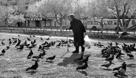 Senior woman and pigeons Royalty Free Stock Photos