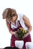 Senior woman planting flowers Royalty Free Stock Photo