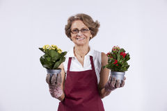 Senior woman planting flowers Royalty Free Stock Image