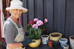 Senior woman planting flowers in a pot Stock Image