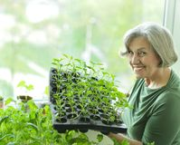 Senior woman planting Royalty Free Stock Image