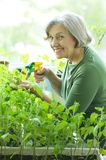 Senior woman planting Stock Image