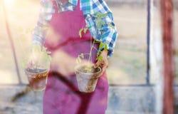 Senior woman planting seedlings Royalty Free Stock Images
