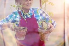 Senior woman planting seedlings Stock Photo