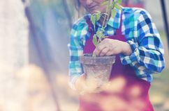 Senior woman planting seedlings Royalty Free Stock Photo