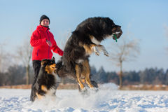 Senior woman playing with dog in the snow royalty free stock photos