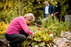 Senior woman pruning flowers Royalty Free Stock Photography