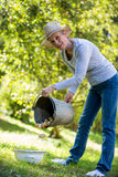Senior woman putting potatoes in bowl from bucket in garden Stock Photos