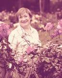 Senior woman roses Stock Image