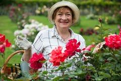 Senior woman roses Stock Photo