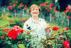 Senior woman roses Royalty Free Stock Photography