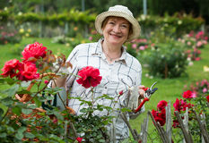 Senior woman roses Royalty Free Stock Image