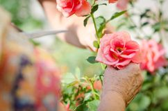Senior woman's hand Royalty Free Stock Photography