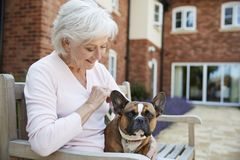 Senior Woman Sitting On Bench With Pet French Bulldog In Assisted Living Facility stock image