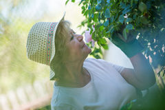 Senior woman smelling flower in garden Royalty Free Stock Photos