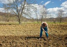 Senior woman sowing potatoes Royalty Free Stock Image