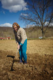 Senior woman sowing potatoes Royalty Free Stock Photos
