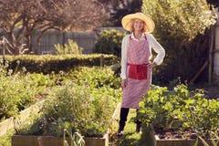 Senior woman standing proudly in her healthy vegetable garden Stock Photos