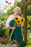 Senior woman standing with sunflowers in garden Royalty Free Stock Photos