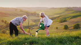 Senior woman, together with her granddaughter, plant a tree. Against the background of a beautiful green landscape stock video