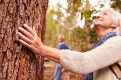 Senior woman touching tree in forest, man in the background Stock Photography