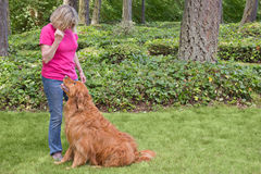 Senior woman training dog to sit. Attractive senior woman training her golden retriever to sit obediently using hand signals Royalty Free Stock Photos