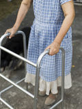 Senior woman using a walker with dog Stock Photo