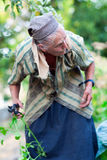Senior woman in the vegetable garden Royalty Free Stock Images