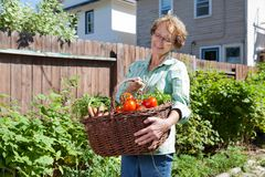 Senior Woman with Vegetables from Garden Stock Photography