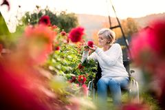 Senior woman with wheelchair on a walk. Stock Photography