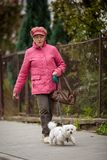 Senior woman walking her little dog on a city street Royalty Free Stock Images