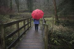 Senior woman walking in the rain with a red umbrella. Rear view image of a mature woman walking in the rain with a red umbrella Royalty Free Stock Photo