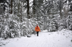 Senior woman walking in a snowy forest Stock Photography