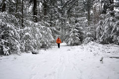 Senior woman walking in a snowy forest Stock Images